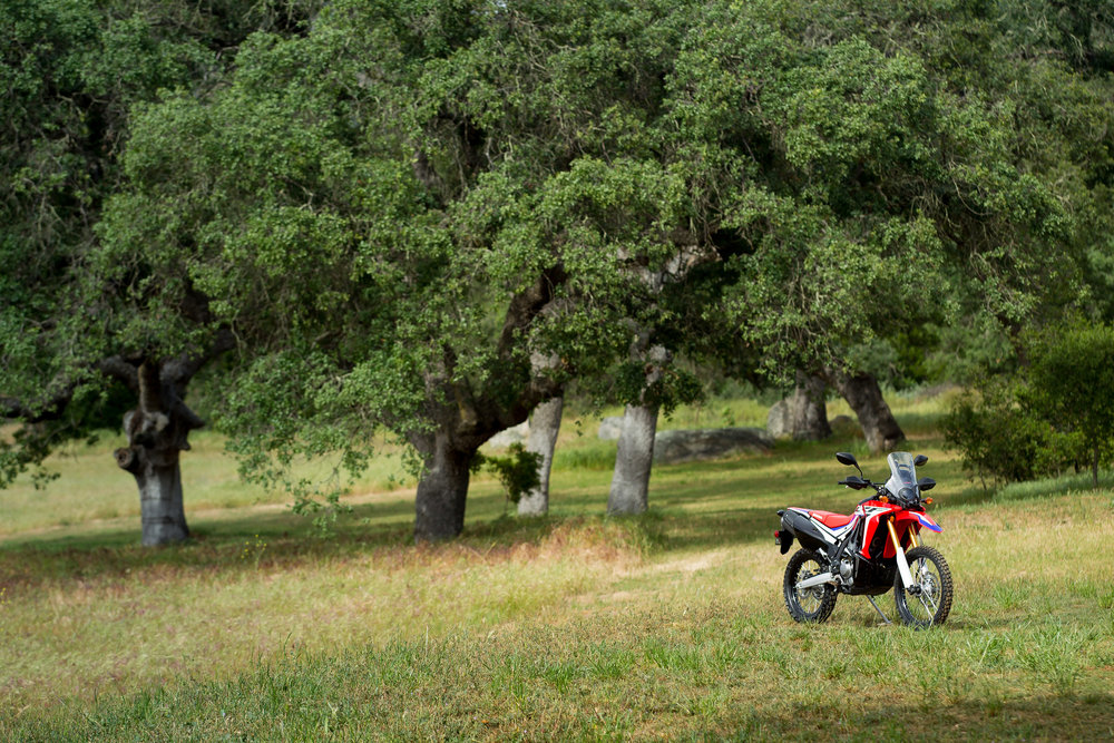 2017_Honda-CRF250Rally-58.jpg