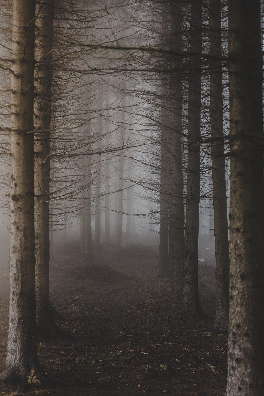 tree bones.jpg