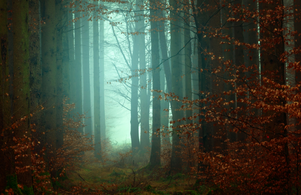 autumnal woods.png