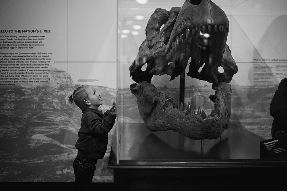 Unfortunately, the dino exhibit is on hold until next year for renovations, but he was still excited about seeing the T-rex head up close. Not to mention the Triceratops and the full T-rex skeleton they had on display.