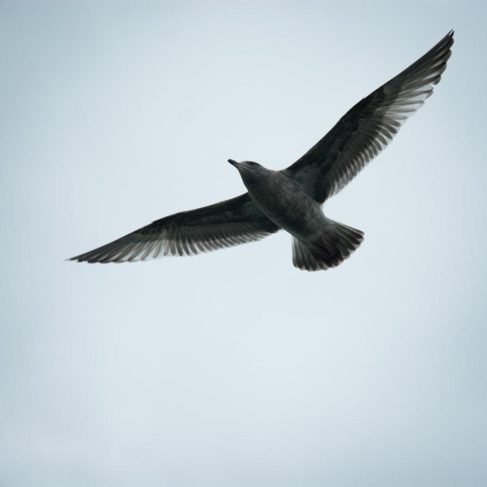 free-bird.jpg