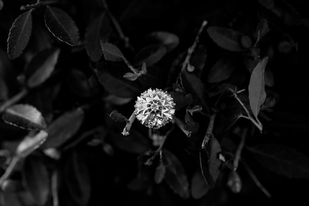Christina Paz Photography _Anna's Engagement Ring -9.jpg