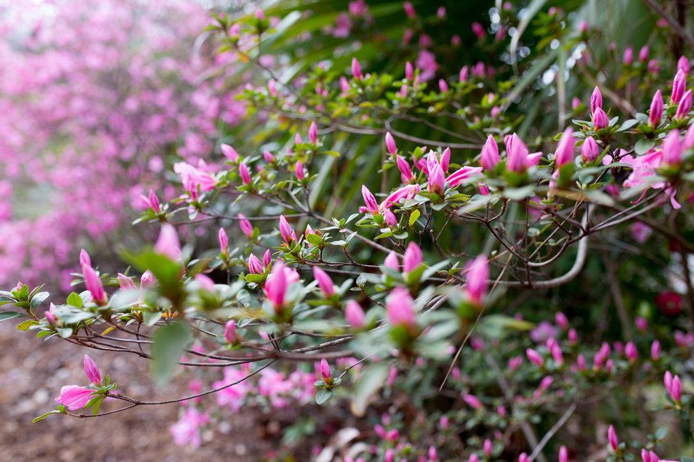 ChristinaPazPhotography_HeartsoftheSouth__Bradley Olmsted Gardens_JoyceFowler-17.jpg