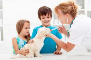 compounded-pharmacy-vet-sml.jpg