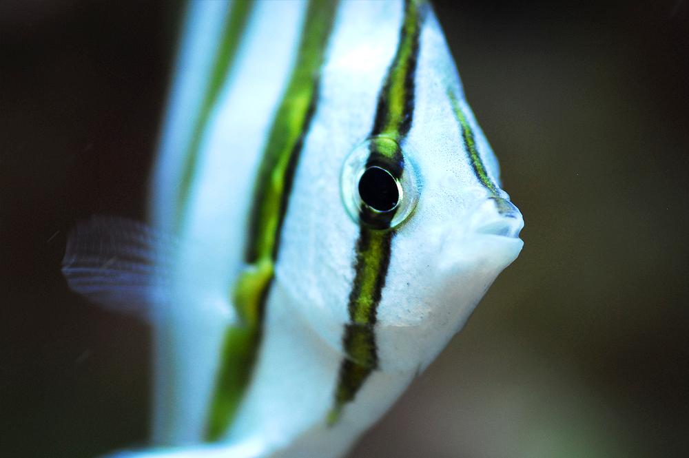 Fishteam