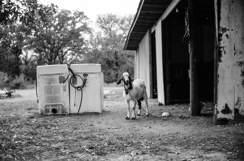 washing_machine_goat.jpg