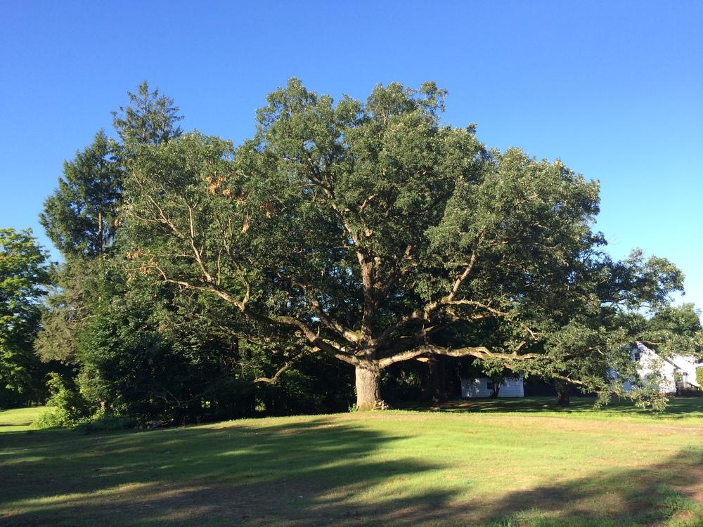 BENEFITS oF TREES