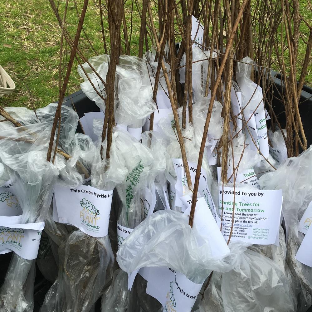 We Plant It Forward Image of Tree Seedlings