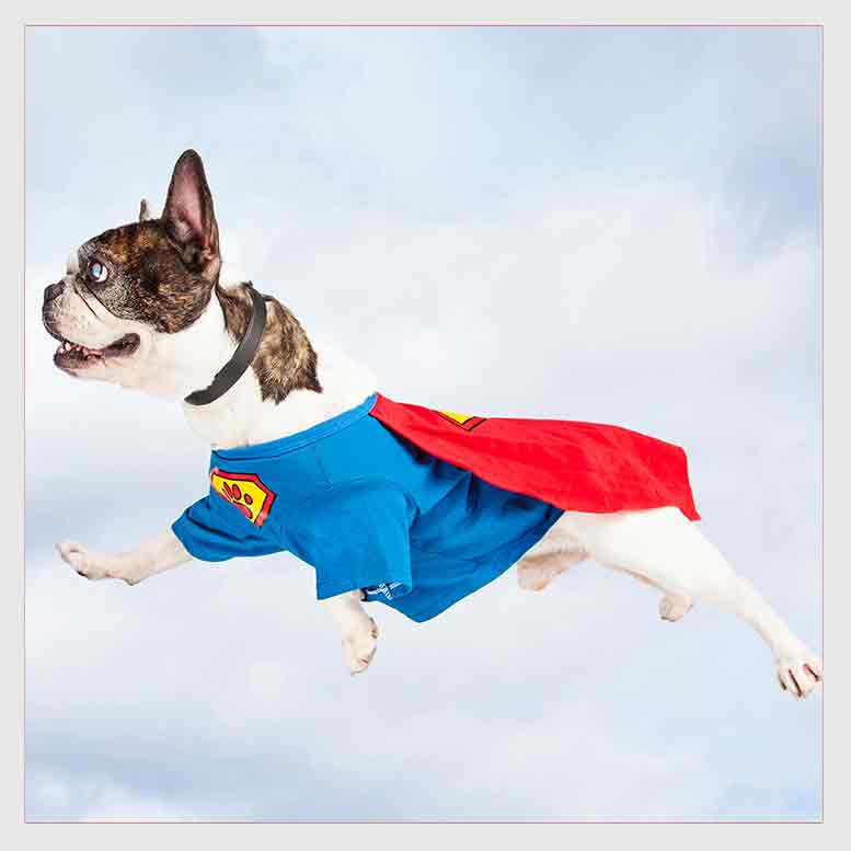 Superhero Dog Flying Through Sky.jpg