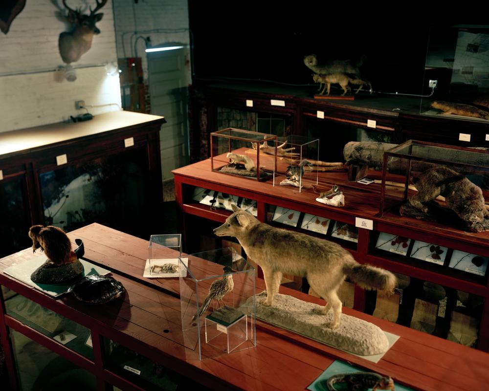 L.C. Bates Museum, Hinckley, ME
