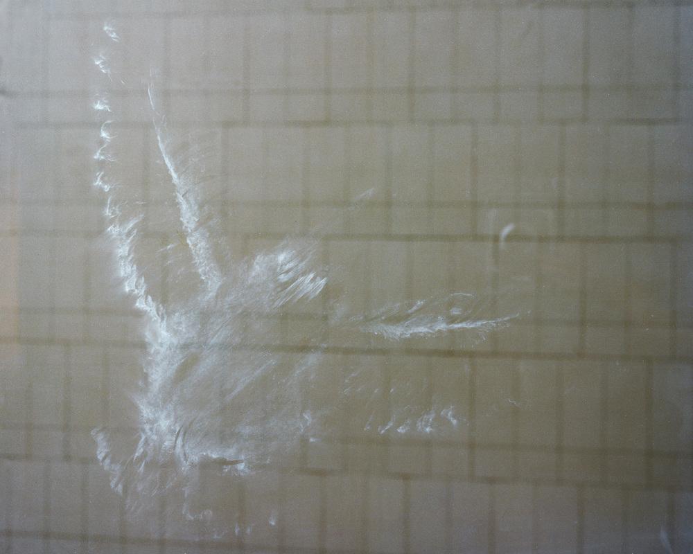 Bird_LMCC_SM.jpg