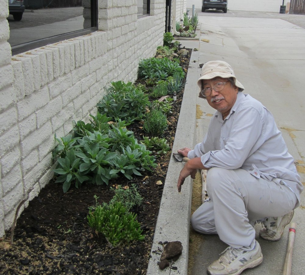 Mike Yee, planting his CMATO garden.