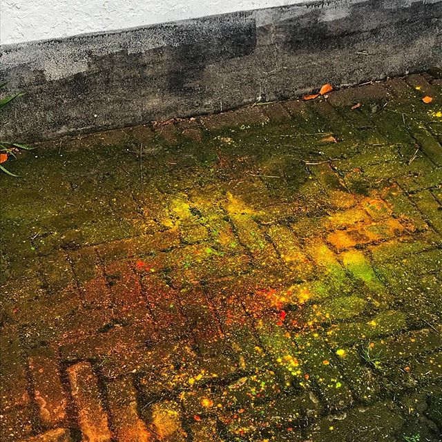 After a colour explosion #netherlands  #yellow #green #orange #red