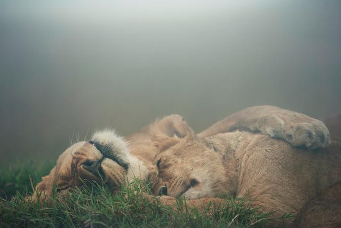 Bild:   Nina Siematowski