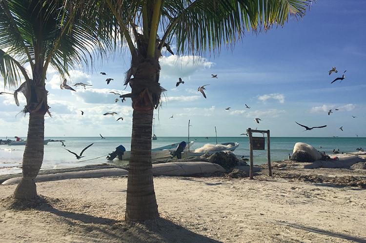 Palmen und Meer Holbox