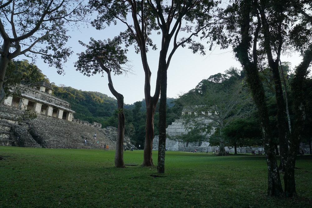 Die Ruinen von Palenque in Mexiko