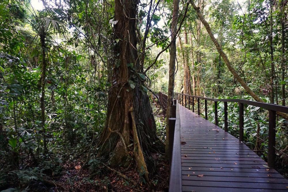 Karibikküste Costa Rica Dschungel