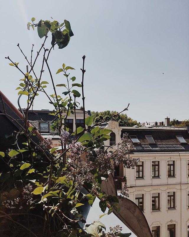 Leipzig-Liebe 💚  #bessernachhaltig #greenliving #ecofriendly #savetheplanet #nachhaltigkeit #exploremore #thatsdarling #freedomthinkers #visualwanderlust #welivetoexplore #keepitwild #artofvisuals #embracingaslowerlife #streetscene #neighborhoodlove #cityandcolour #slowlife #thatauthenthicfeeling #urbanstyle #thehappynow #wearetravelgirls #seekthesimplicity #girlsvsglobe #leipzigcity #thisisleipzig #leipzigram #balkonien