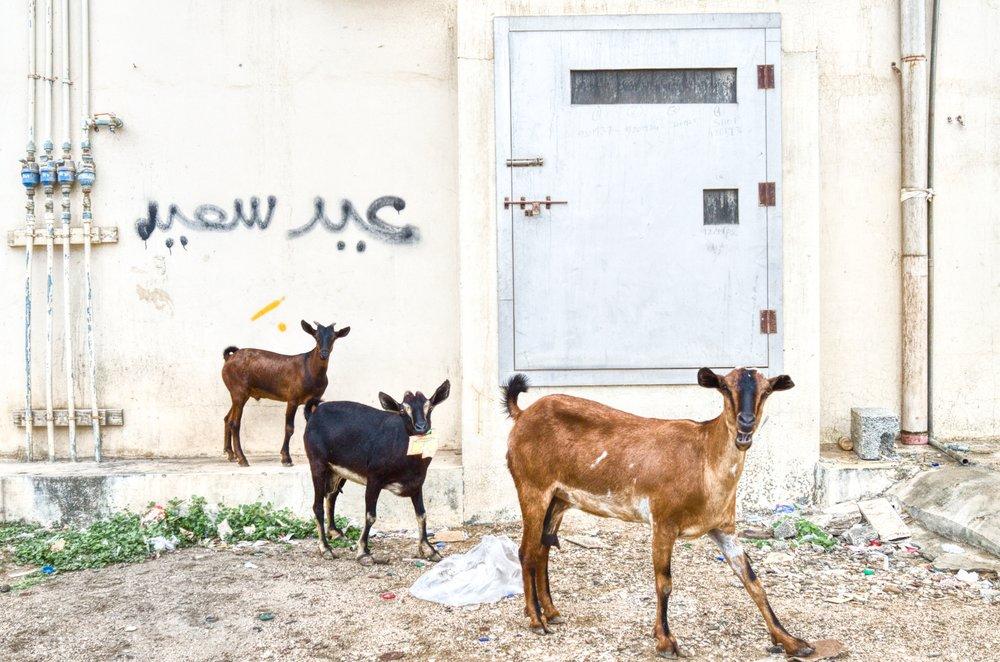Photographed by Athoob Al-Shuaibi, Salalah, Oman, 2017