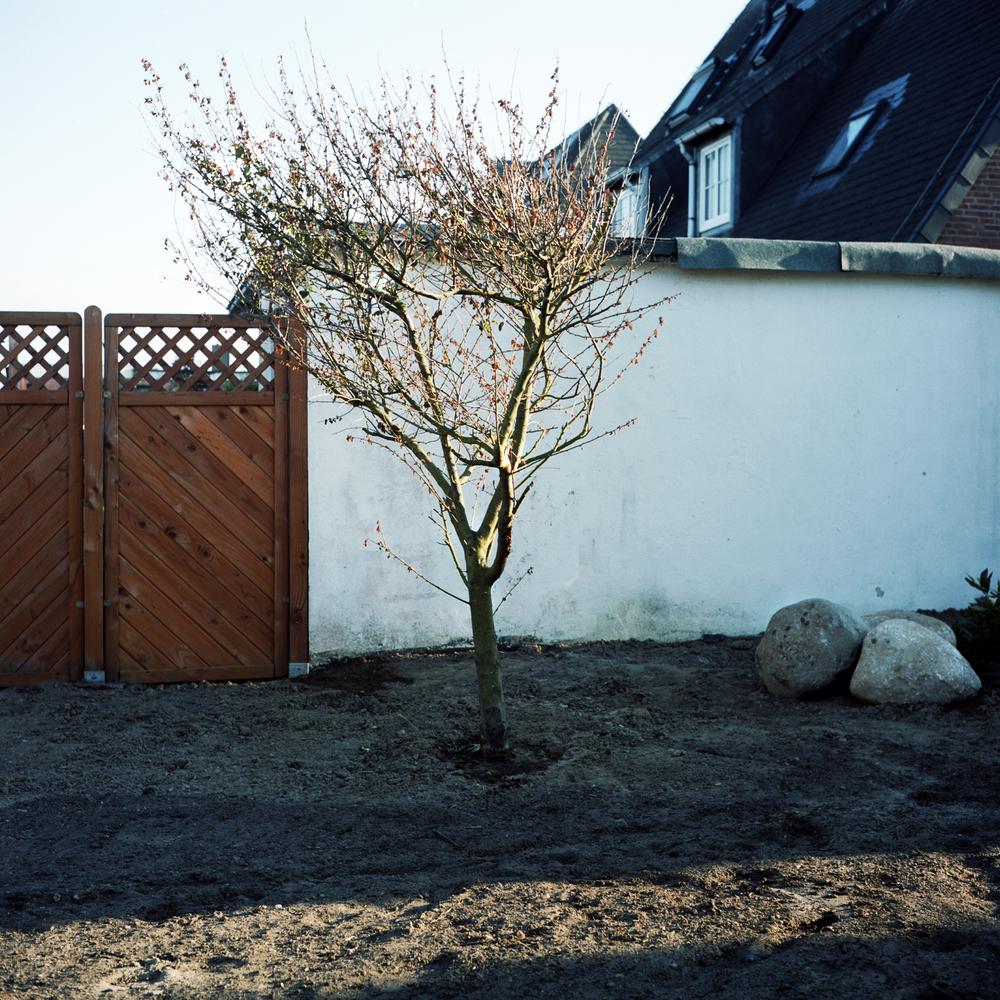 2_Baum_Westerland.jpg