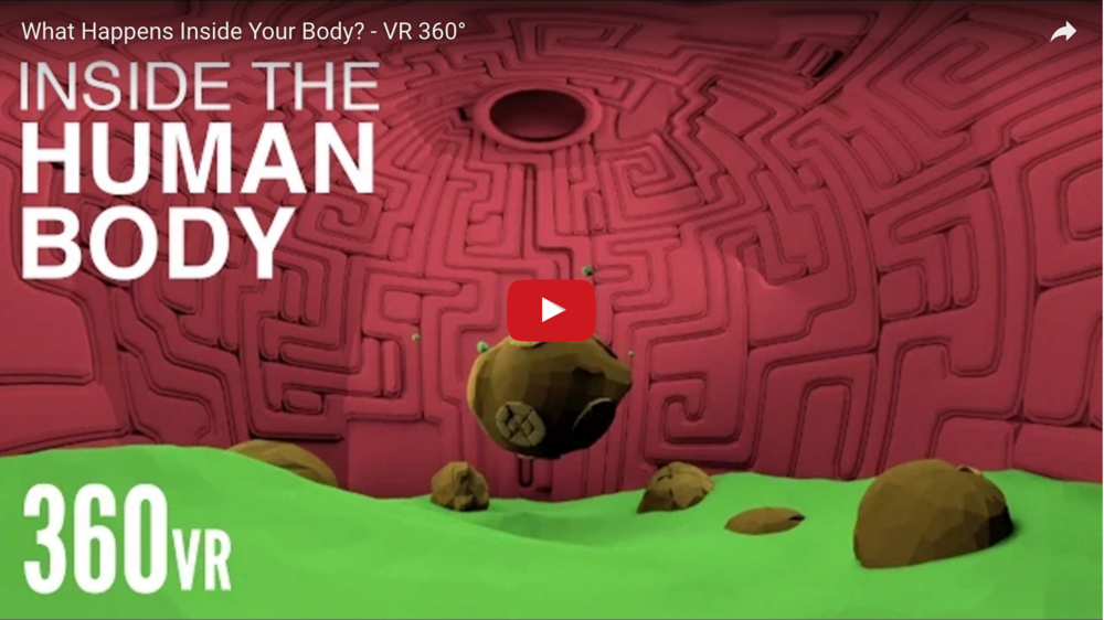 What Happens Inside Your Body? | 360 Video