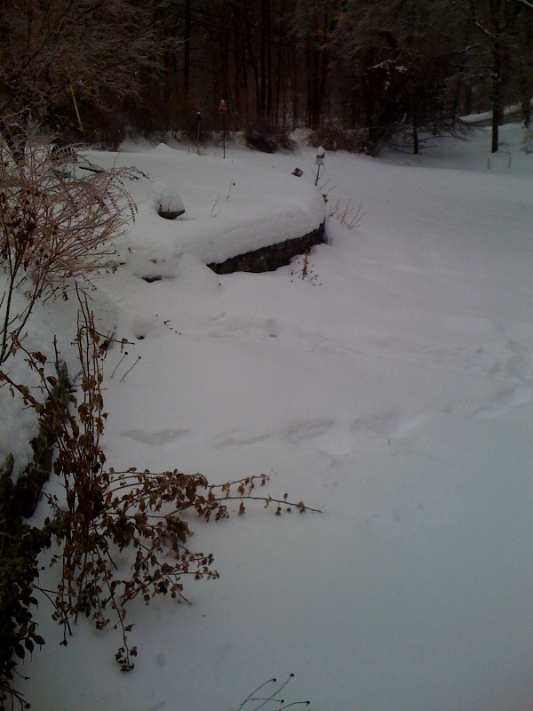 winter2010.jpg