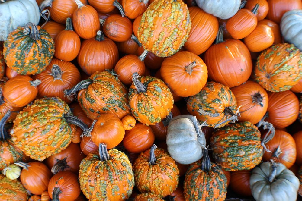 pumpkins - shutterstock_699059332.png