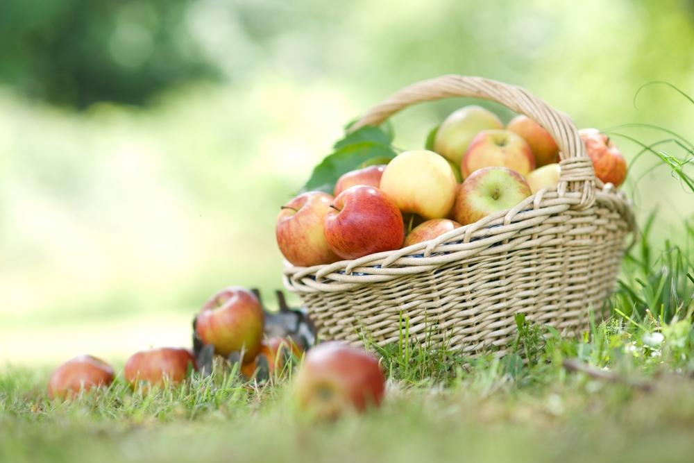 Apples - shutterstock_115709602.png