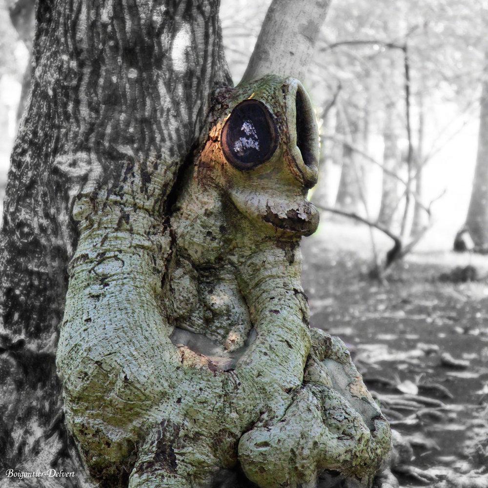 Woodland Creatures - Dans les forêts du monde, se cachent des créatures de bois singulières… Un conte photographique magique et jubilatoire révélé par l'objectif et la plume de BBD.