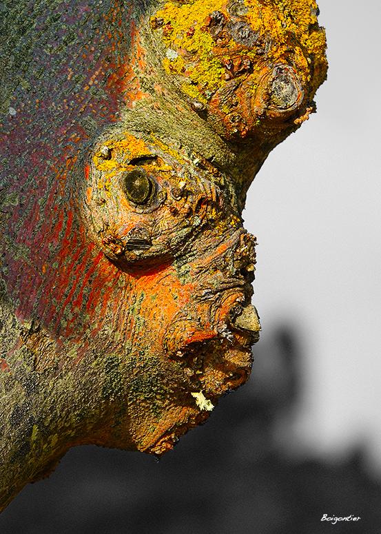 Têtes de Tronc - Troublants, poétiques ou grimaçants, les esprits malicieux se cachent dans les troncs des grands arbres…