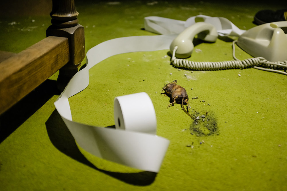 Dead mouse in the dining area.