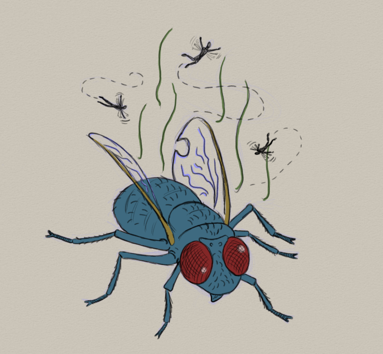 ripe fly.png
