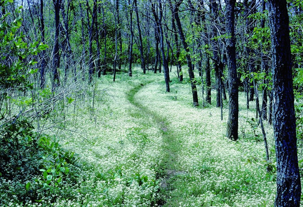 Stock photo of the Appalachian Trail