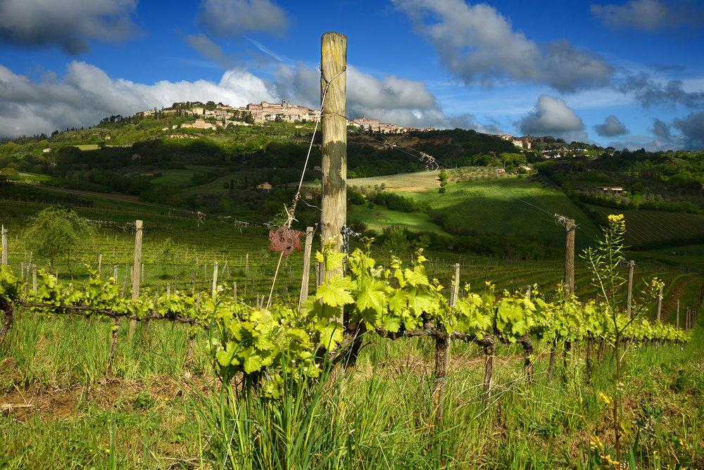 Salcheto winery overlooks the town of Montelpuciano