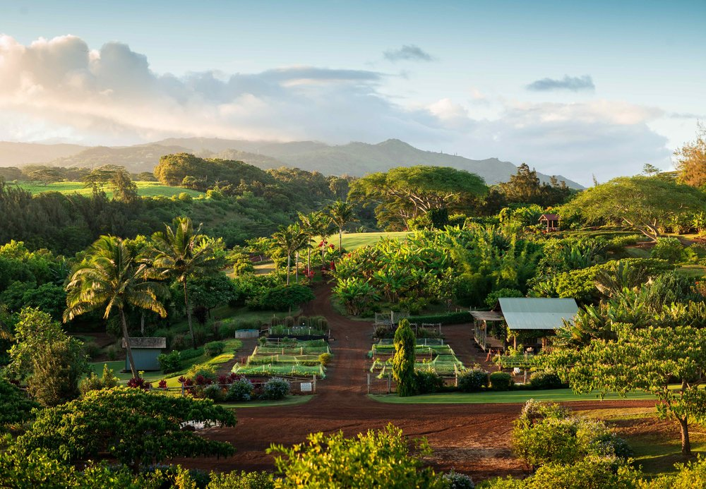 The organic farm at Kukui'ula