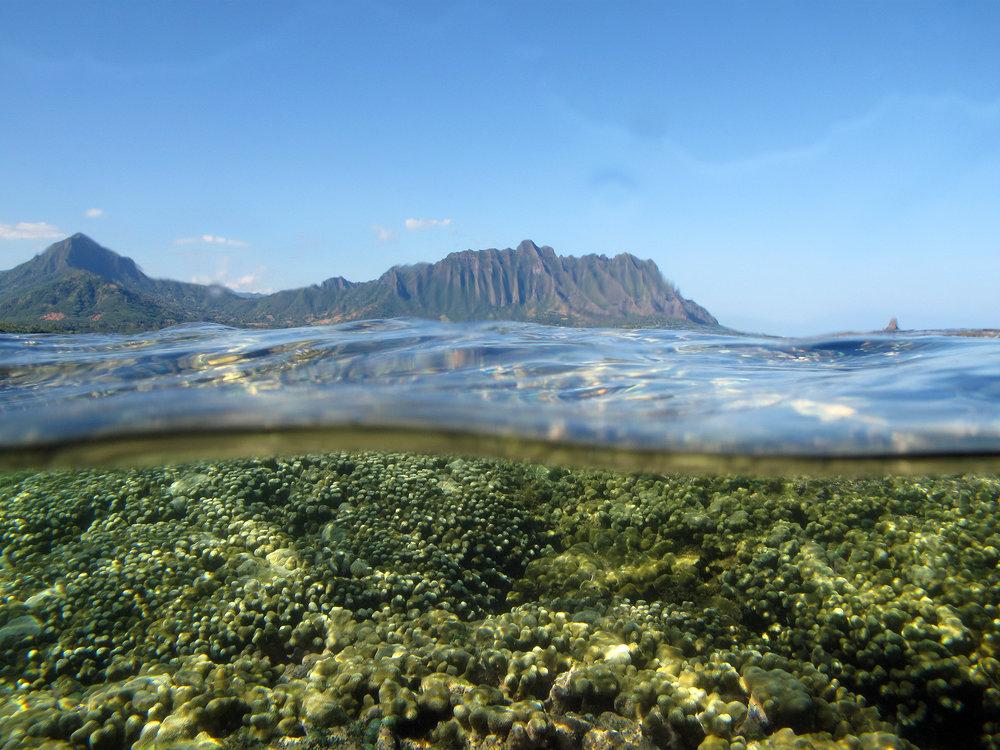 Corals off the coast of Coconut Island, Hawaii