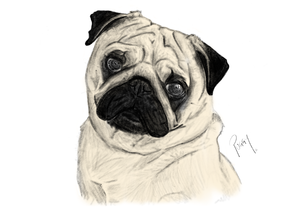 PUGGY.png