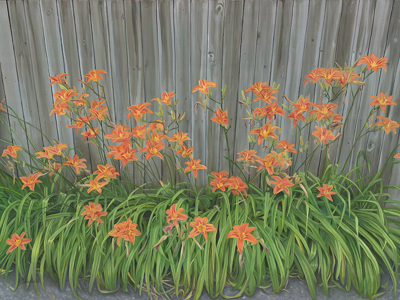 Summer Lilies Against a Fence