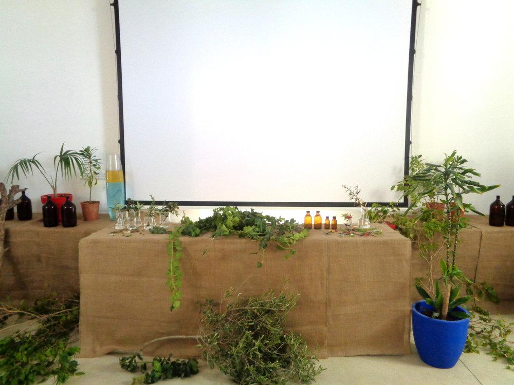 plantaariumscreeninstall.JPG