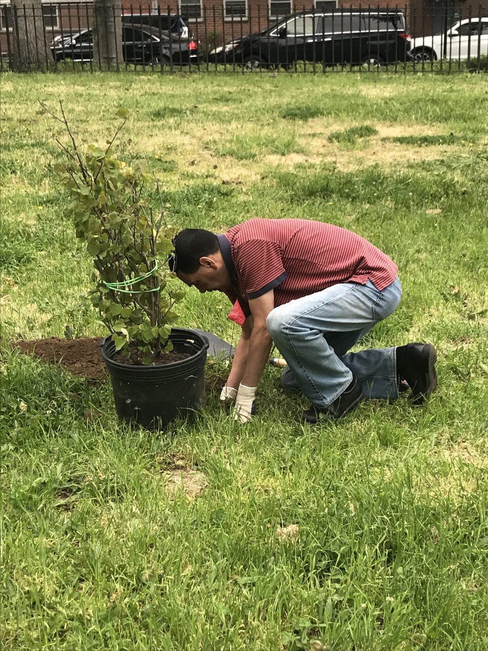 Volunteer Planting.JPG