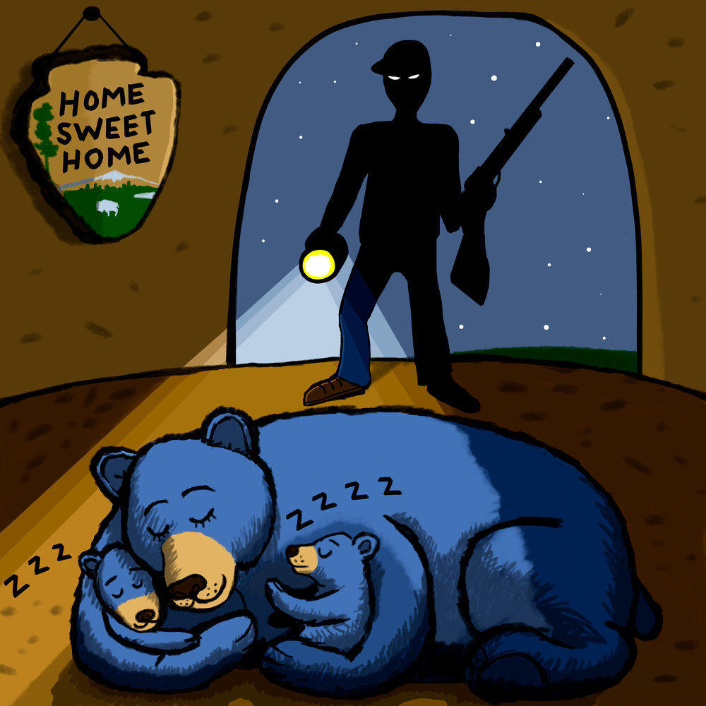 spotlighting-bears-for-web.jpg