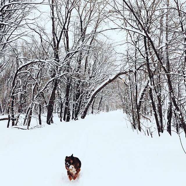 Snow day hike with Aksel, who teaches me about being content in absolutely any circumstance ❄️ . . . . #akselgram #myyogateacher