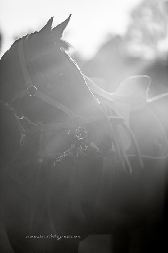 Polo & Sun Flares