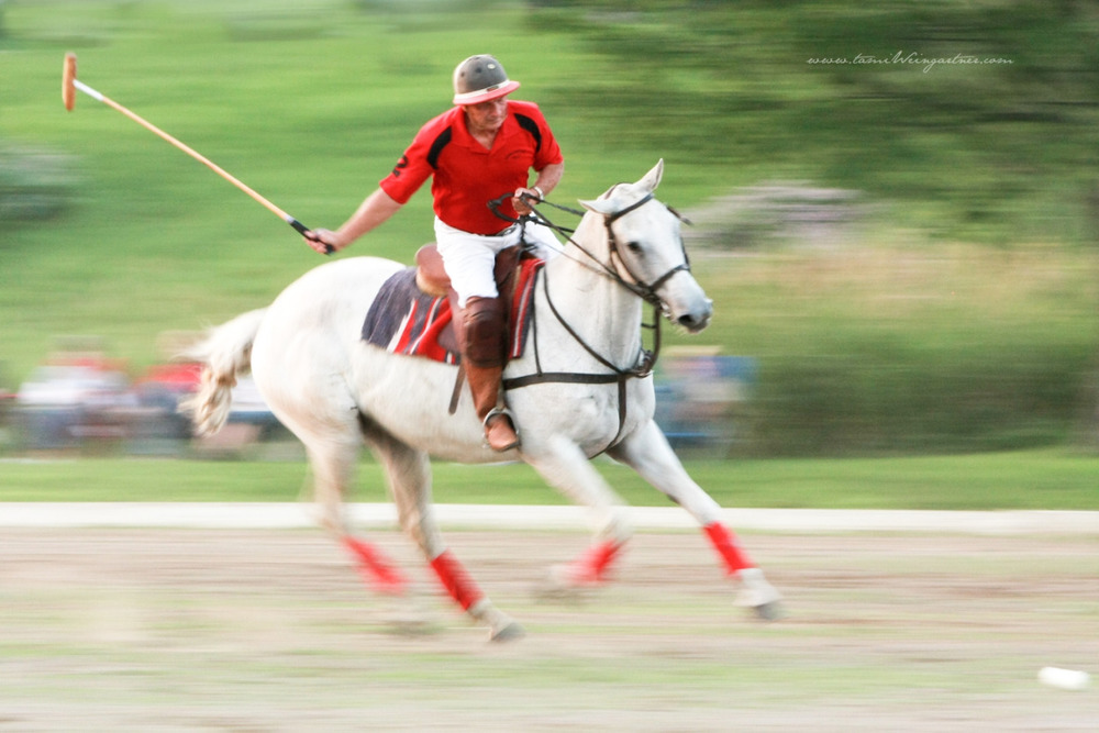 Polo at Darlington Polo Club.  Glenn Watterson Sr playing on a white horse.