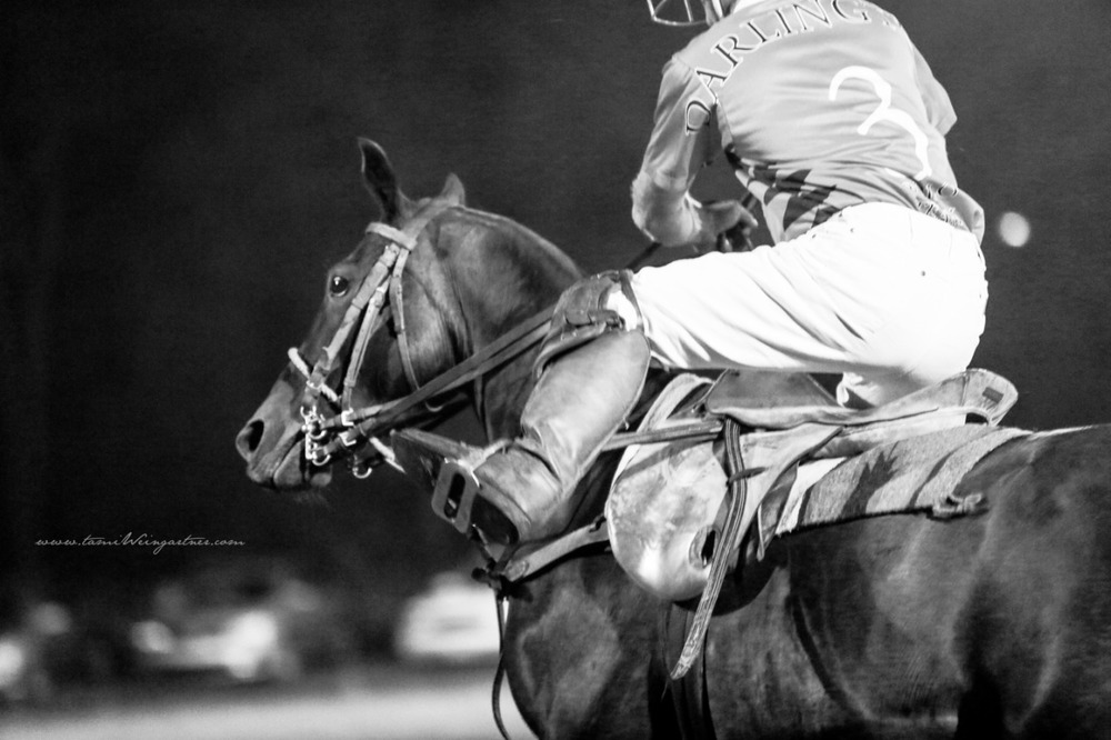 Polo in Darlington, PA….my favorite polo pony playing under the lights.