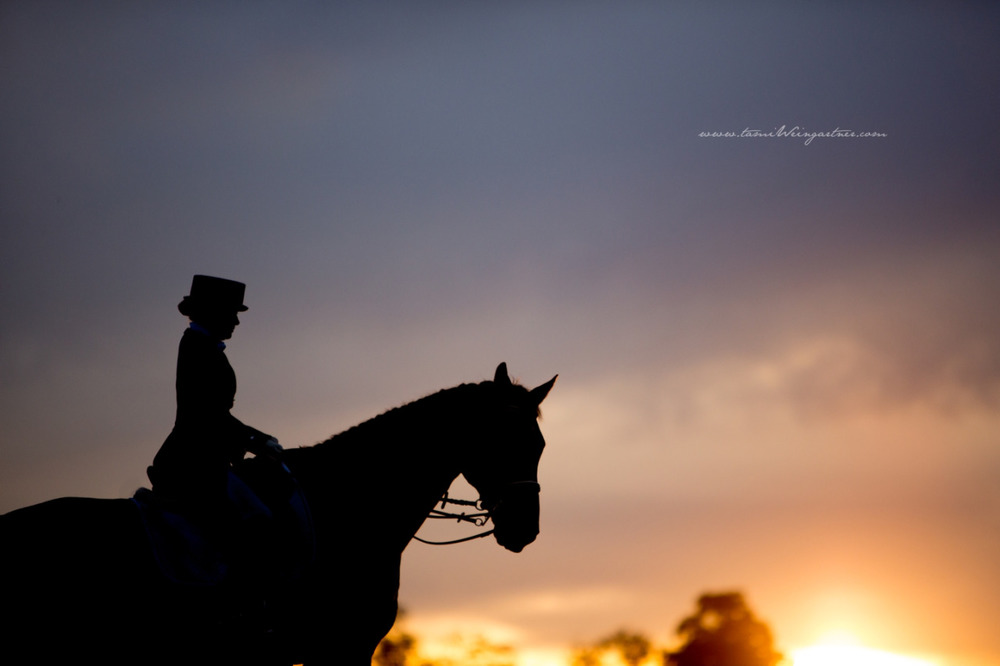 Sunset with FEI Dressage Rider and Horse.