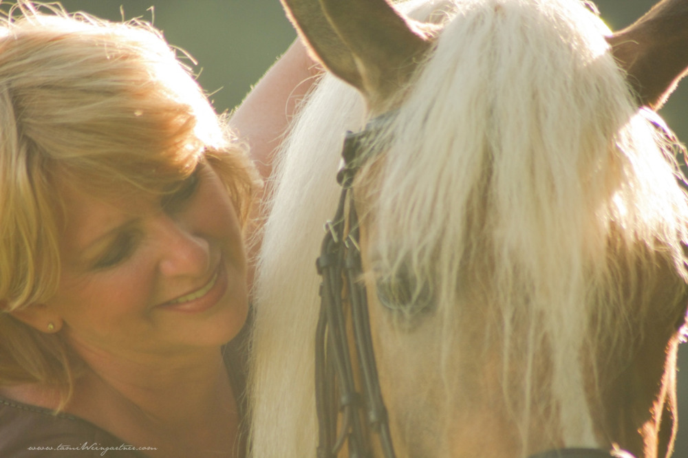 Sunset with Peggy.  Peggy is a Haflinger (Avelignese) mare, who rides & drives.