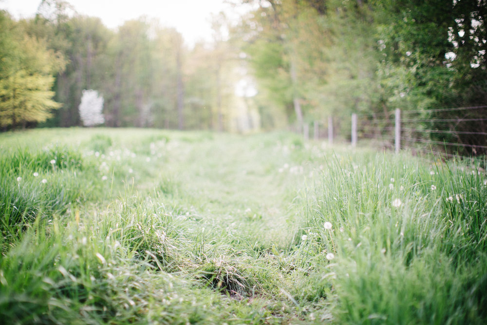 Pasture_Field_High_Tension_Fence
