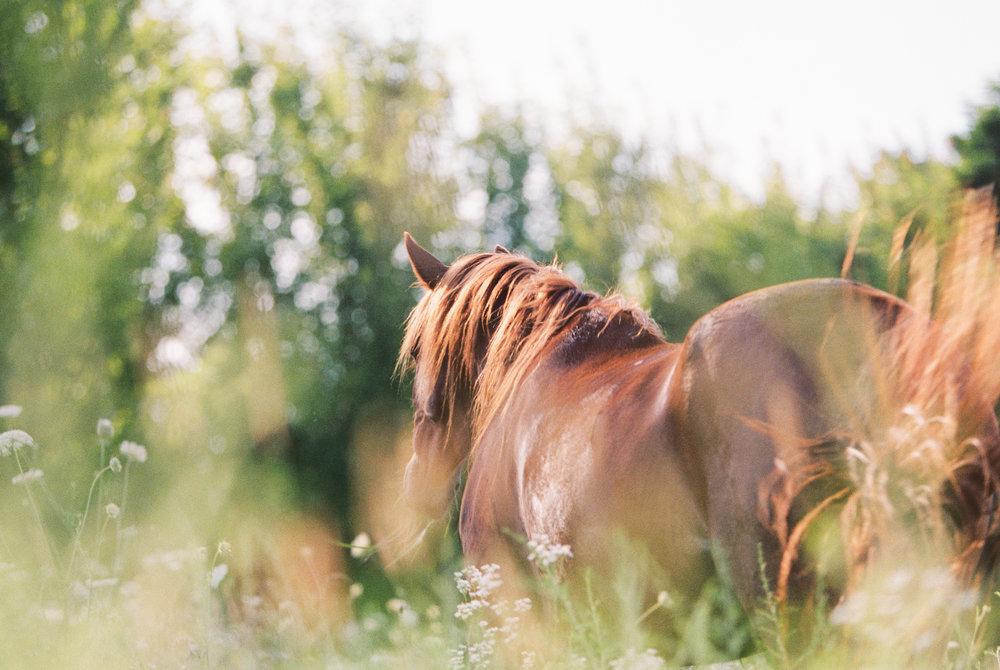 Equine_Film_At_Liberty