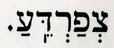 Hebrew letter for Frog, represent for the biblical plague and modern invasive species
